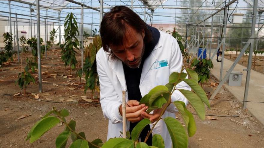 """Investigan las """"venas de los árboles"""" para hacer frente a la sequía"""
