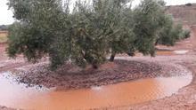 La región pedirá reducir los módulos agrícolas en el IRPF de 2019 en cultivos afectados por climatología adversa