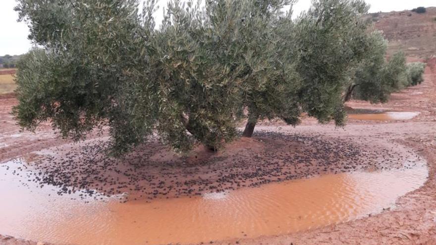 Daños en olivares