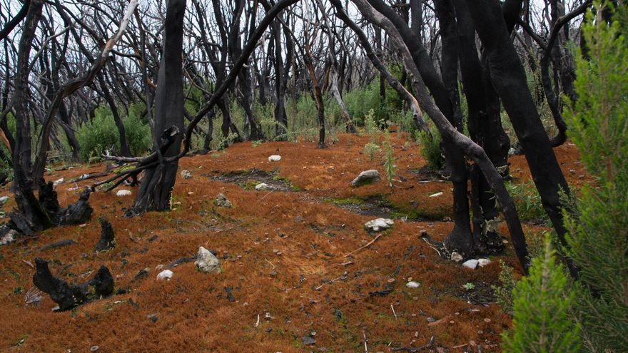 Aspecto actual de una de las zonas afectadas por el fuego | Foto: naturgucker.de