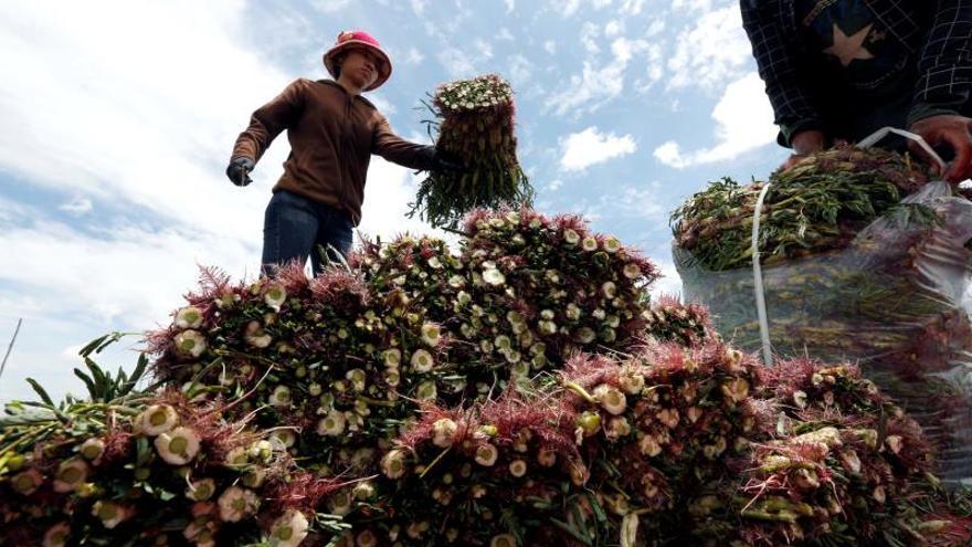 Un informe de DD.HH. señala la vulneración de los derechos ambientales en Paraguay