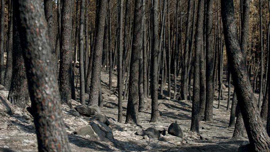 Extinguido el fuego registrado en Entrimo (Ourense),que quemó 3.000 hectáreas
