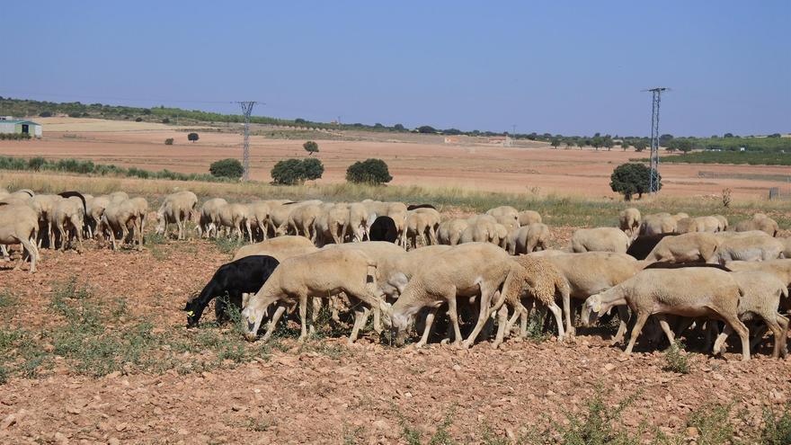 Castilla-La Mancha flexibiliza las órdenes de ayudas y adelanta los pagos para el sector agroalimentario