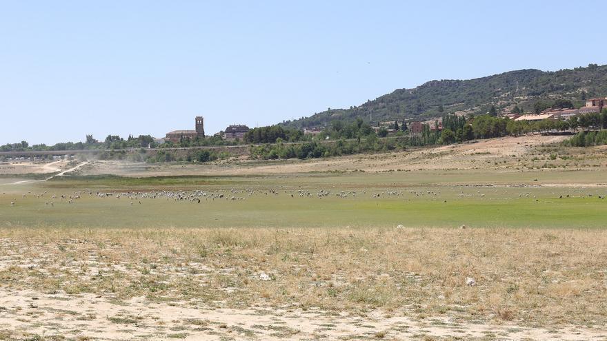 Hoy las ovejas pastan en pleno embalse de Entrepeñas, en Sacedón (Guadalajara)