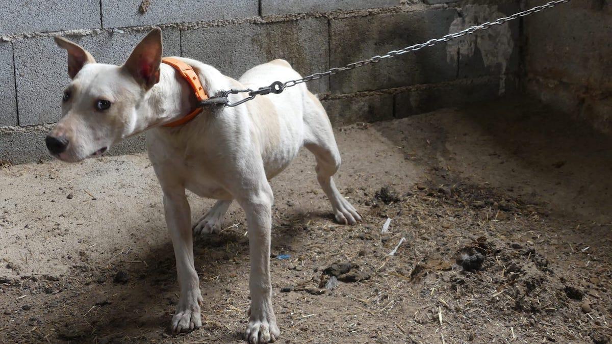Rescate de perros en Granada y trasladados a Córdoba.