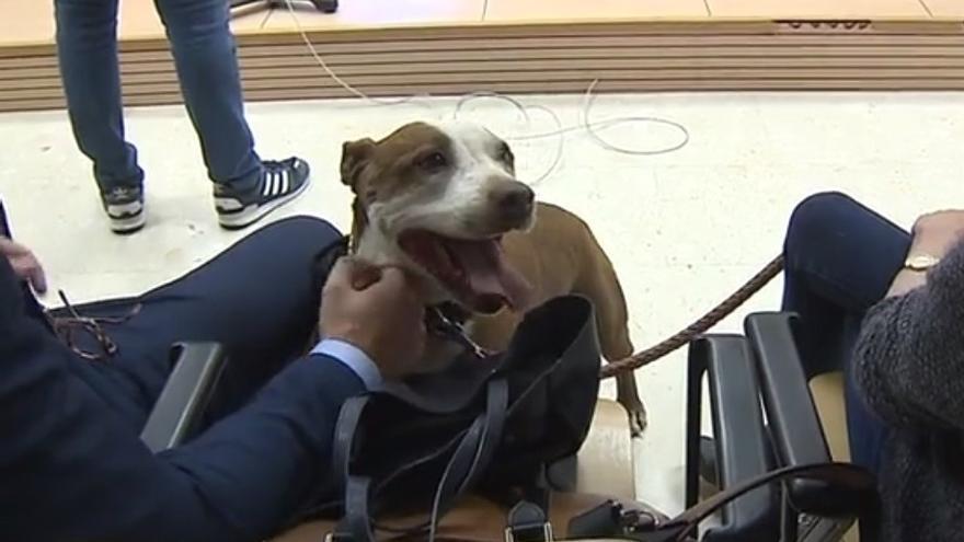 La perra Milagros, en el juicio en el que ha declarado como testigo