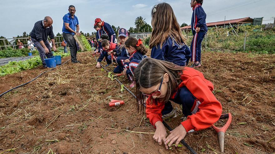 La Granja del Cabildo de Gran Canaria realiza jornadas para dar a conocer a los más pequeños la agricultura en el norte de la Isla.