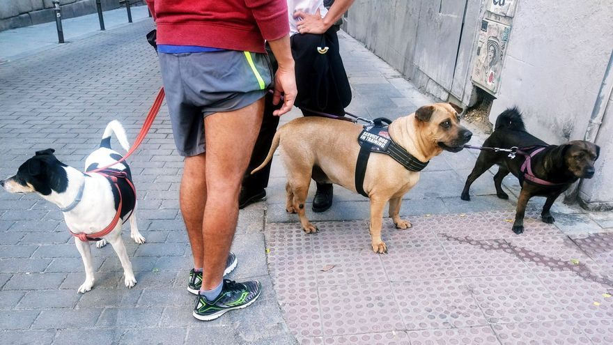Perros en la calle San Andrés de Madrid