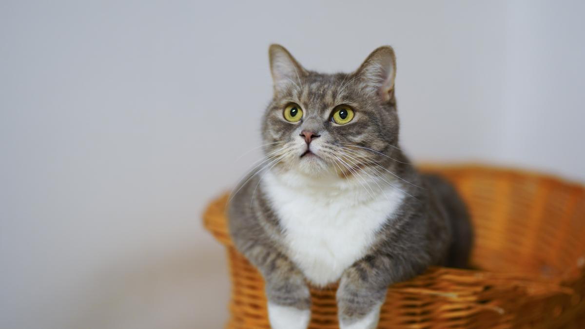 Un gato mira hacia arriba