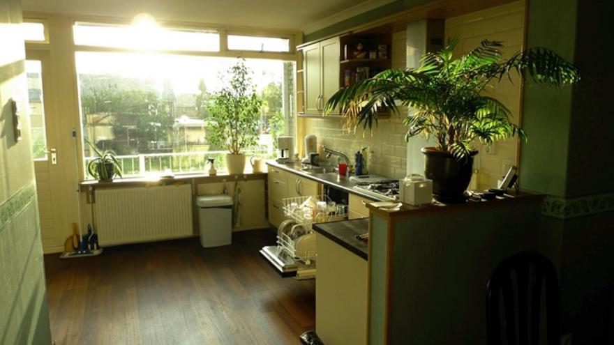 Las cinco plantas de interior ideales para cualquier novato en jardinería