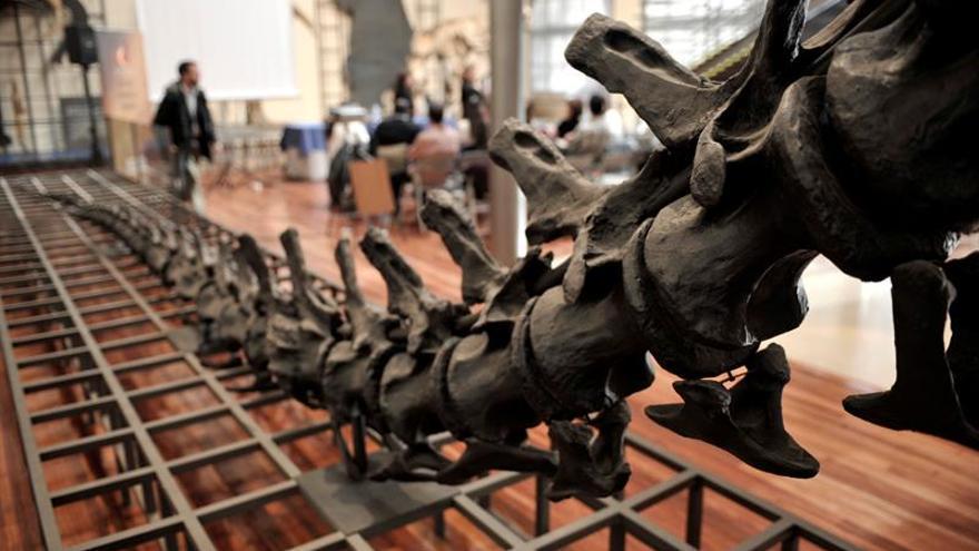 El Museo Nacional de Ciencias Naturales abre sus sótanos a Google
