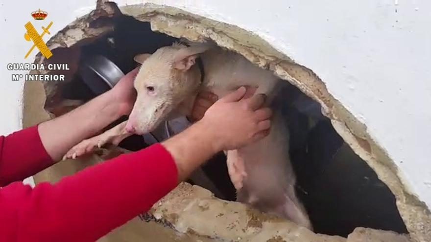 Perro pozo Badajoz rescatado