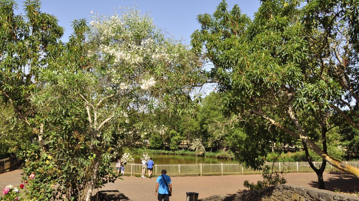 Parque recreativo de La Laguna de Barlovento.