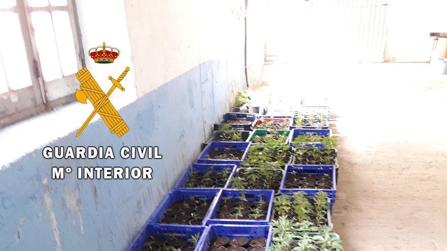Tres detenidos en Urriza tras ser interceptados con 70 plantas de marihuana en un vehículo