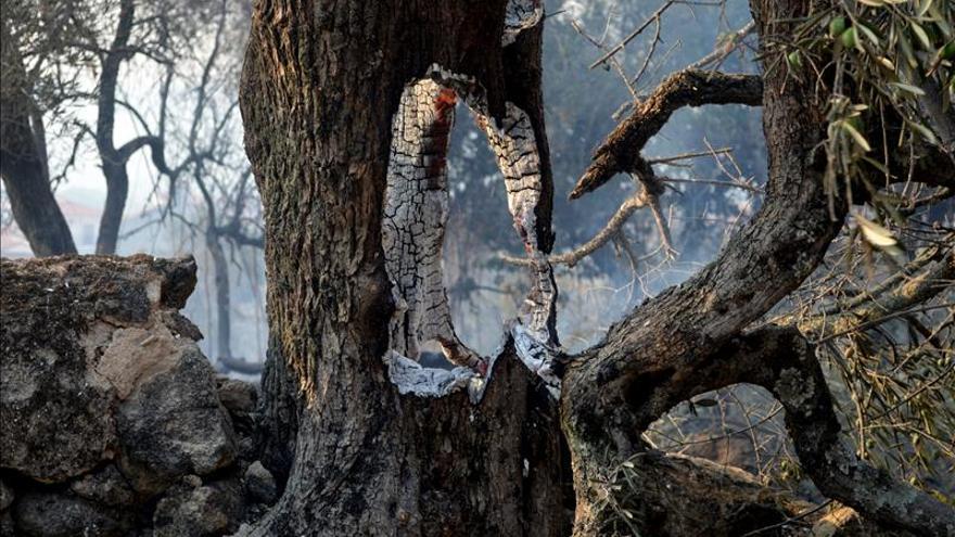 El incendio forestal de la Sierra de Gata cacereña llega a su tercer día sin control, avivado por el fuerte viento, lo que ha obligado a desalojar esta madrugada a unas mil personas de la población de Hoyos y a la llegada de más medios para la extinción. / EFE