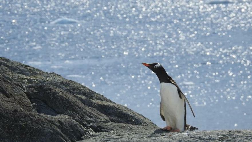 Pingüino en Bahía Paraíso, en la Antártida.