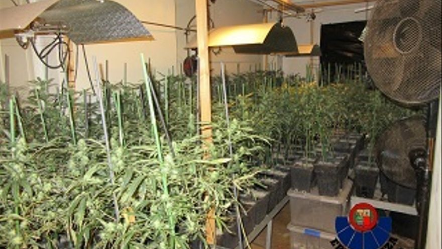 Localizan un cultivo de marihuana con más 1.600 plantas en una vivienda en Zigoitia y detienen a una persona