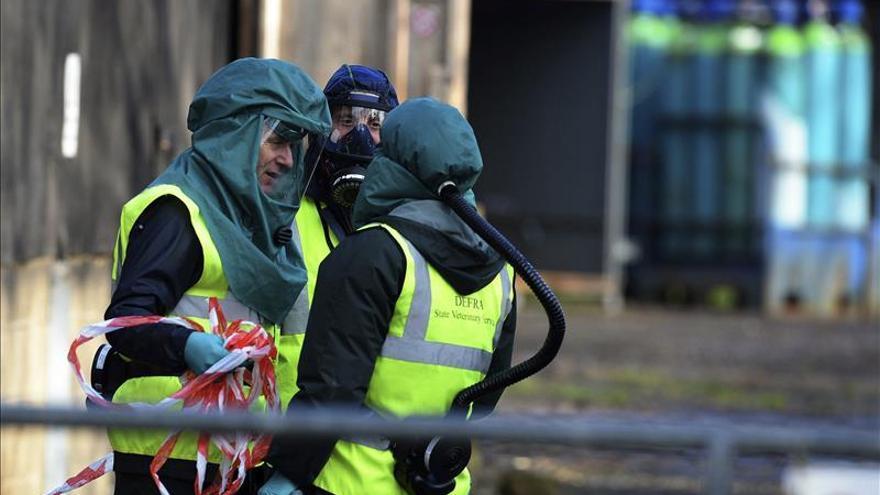 El brote de gripe aviar en una granja de Inglaterra corresponde a la cepa H5N8