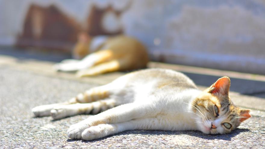 Se sospecha que los gatos de Umashima han sido víctimas de un envenenamiento masivo.