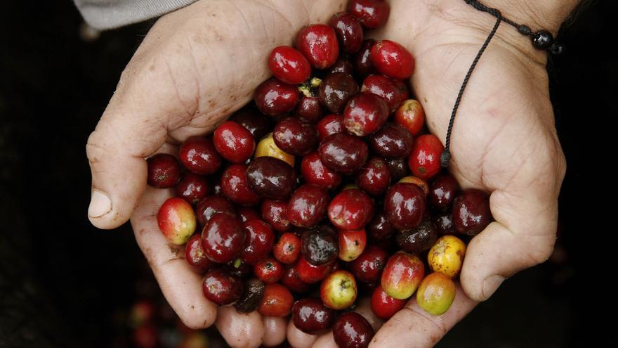 """""""Smart Agro"""", la tecnología al servicio de la agricultura en América Latina"""