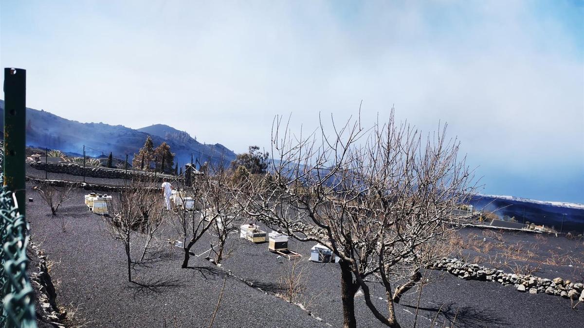 Las colmenas del apicultor Diego Brito en la zona de El Frontón, en El Paso, muy cerca de la erupción de La Palma, con todo el terreno cubierto de ceniza. EFE/Diego Brito