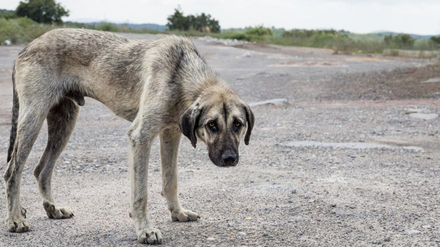 El maltrato animal y la contradictoria búsqueda de igualdad en nuestra sociedad