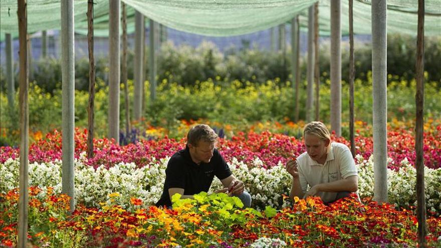 Las flores convierten platos de grandes chefs en una primavera gastronómica