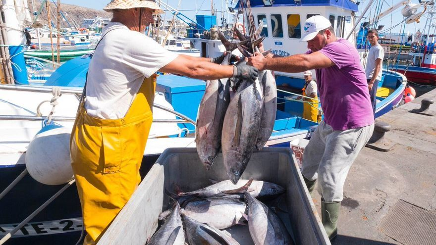 Descarga de atunes en un puerto canario