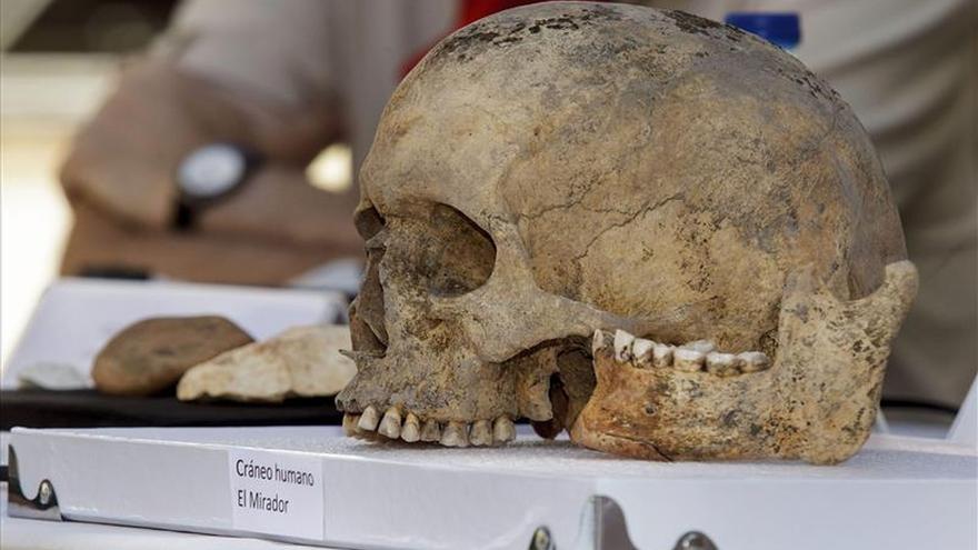 Atapuerca desentierra los restos de cráneos de homínido de más de 400.000 años