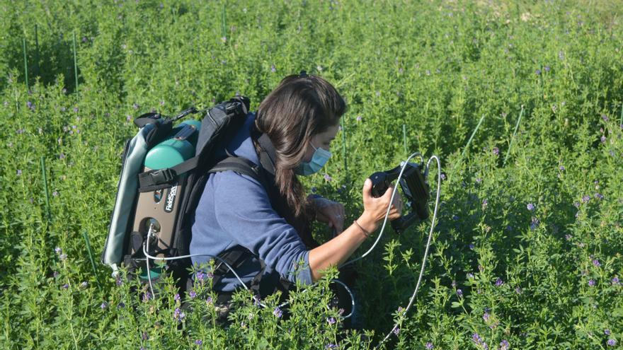 Nvestigadoras del IdAB-CSIC trabajando con plantas de alfalfa.