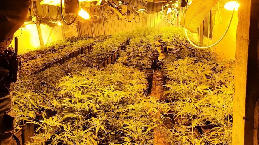 Desmantelada una plantación de 1.726 plantas de marihuana en un pabellón en desuso en Mungia (Bizkaia)