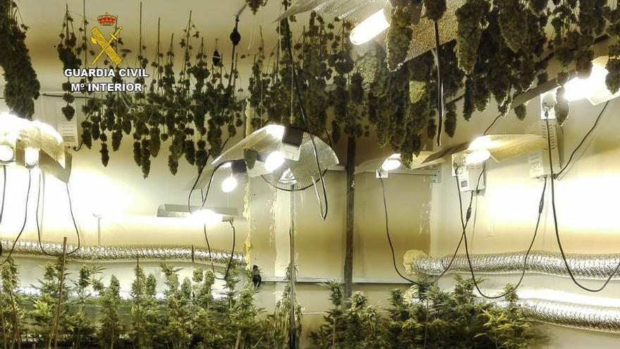 Detenidos cinco hombres cuando recolectaban más de 1.100 plantas de marihuana en un chalet de Sonabia
