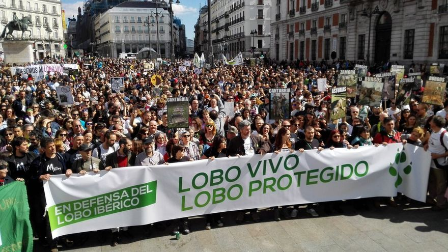 Asociaciones de toda España salen a la calle para pedir la protección del lobo ibérico