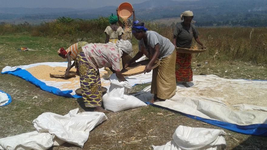 Imagen de archivo. Mujeres tamizan cereales en Kavumu (Congo)