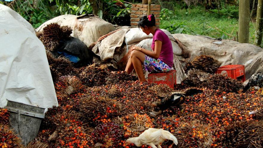 Una trabajadora separa los frutos del aceite de palma para poder procesarlos en North Sumatra, Indonesia / Laura Villadiego