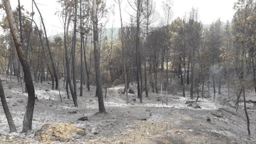 Zona afectada por las llamas entre Yeste y Molinicos.