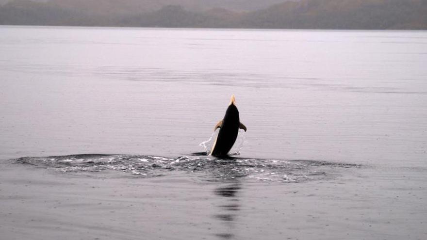 Avistan delfines lisos por primera vez en el estrecho de Magallanes