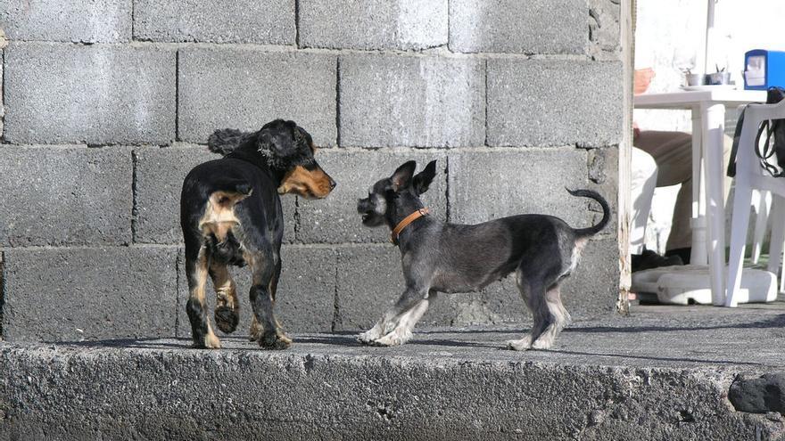 Perros en Alojera, Vallehermoso / Foto: Cristina Fernández