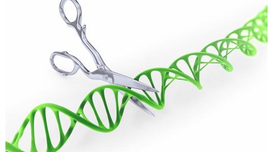CRISPR, una técnica que debe ser cuidadosamente regulada