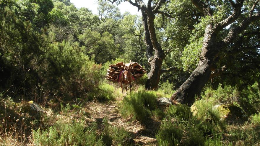 La protección de la fauna silvestre española ya es un referente en la Unión Europea