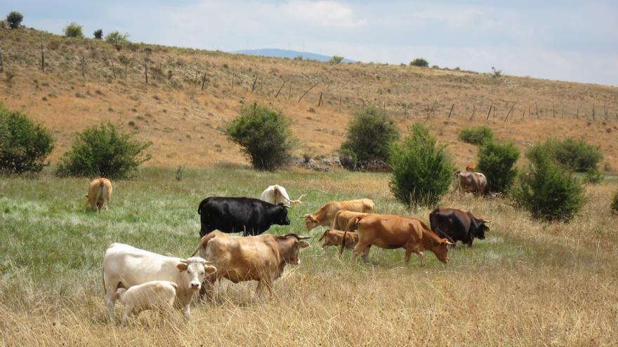 Bruselas da luz verde al pago único a los productores de leche españoles por valor de 31 millones