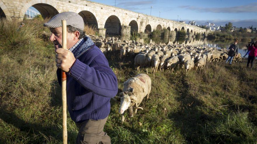 Un pastor junto al Guadalquivir, en Córdoba