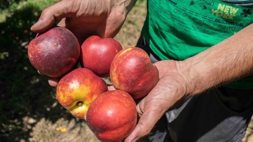 El veto ruso y el poder de las grandes centrales de compra ahoga los productores hortofrutícolas