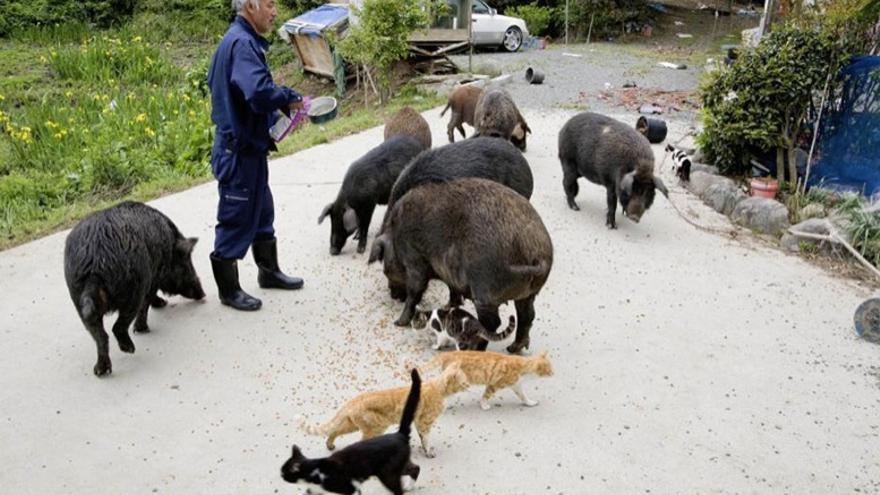 Naoto Matsumura cuida a los animales abandonados en Fukushima tras el accidente nuclear. Foto: Página de apoyo a Naoto Matsumura en Facebook