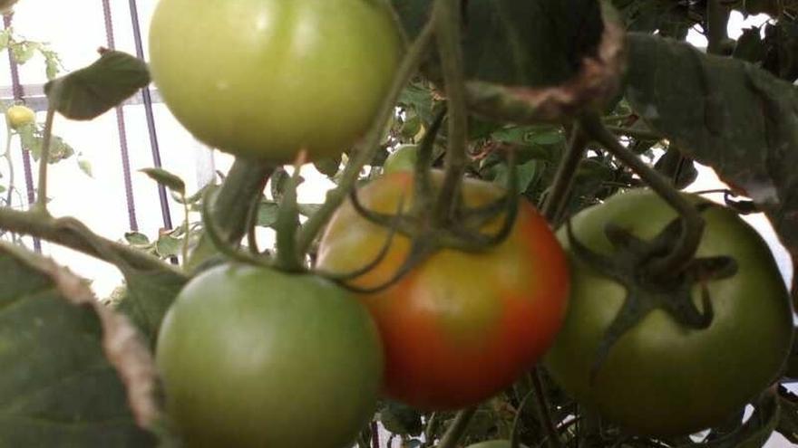 La exportación andaluza de frutas y hortalizas creció un 3% en volumen y un 9% en valor en el primer trimestre