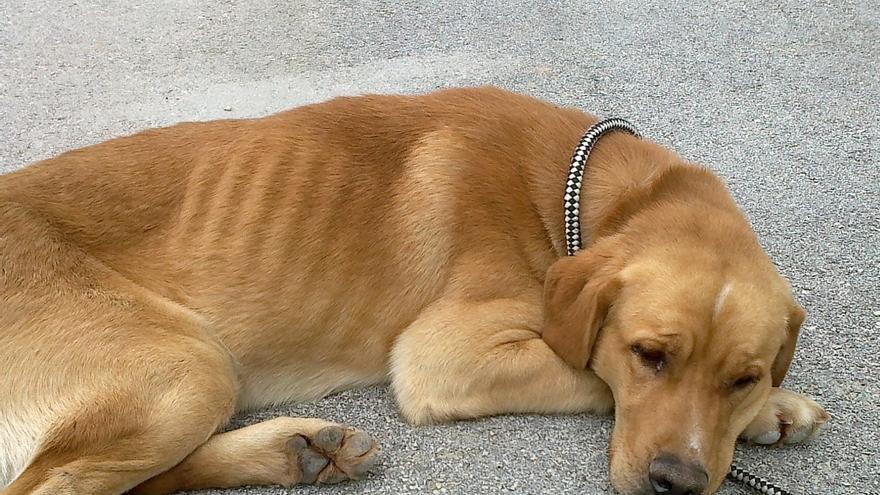 El Centro Zoosanitario Municipal de Málaga abrirá los sábados para facilitar la adopción de animales