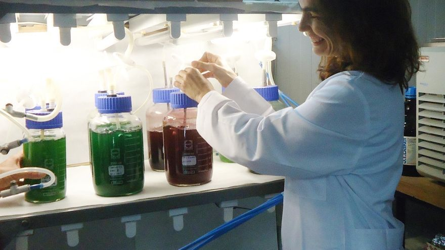 Crean un método para desecar microalgas y reducir así el coste en la producción de biodiésel