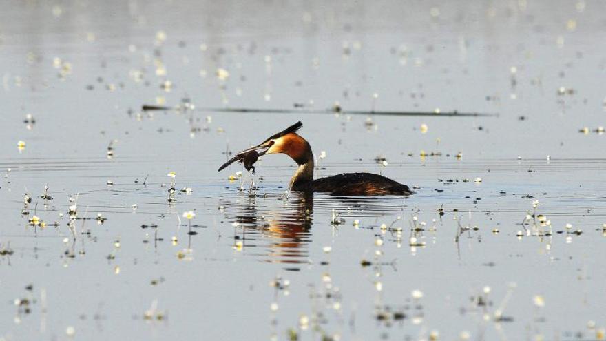 SEO/BirdLife, 60 años al lado de los humedales españoles