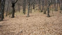 Imagen del Hayedo de Montejo en invierno. Es un bosque de hayas de unas 120 hectáreas situado en las faldas de la Sierra de Ayllón.