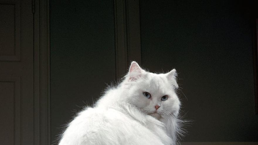 Imagen de Chandona que abre el libro 'Cats' (Taschen)